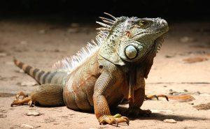 Terrario de iguanas: calor, luz y humedad