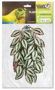 Plantas Suspendidas – Colgantes