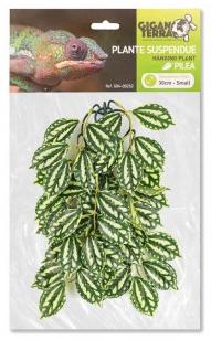 planta colgante suspendida